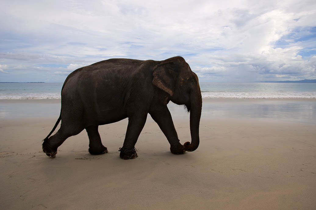 Elephant on the Beach - Travel Photography