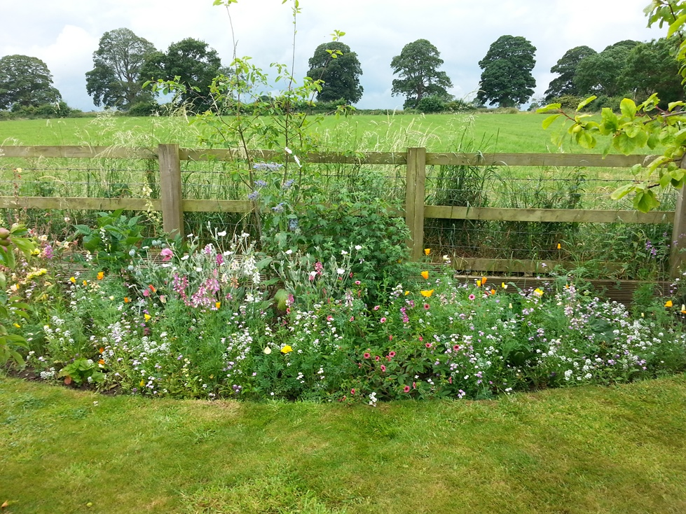 Wildflower planting at the top of the garden