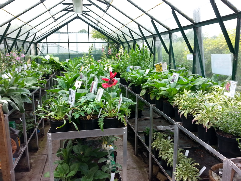 Young plants in the large greenhouse