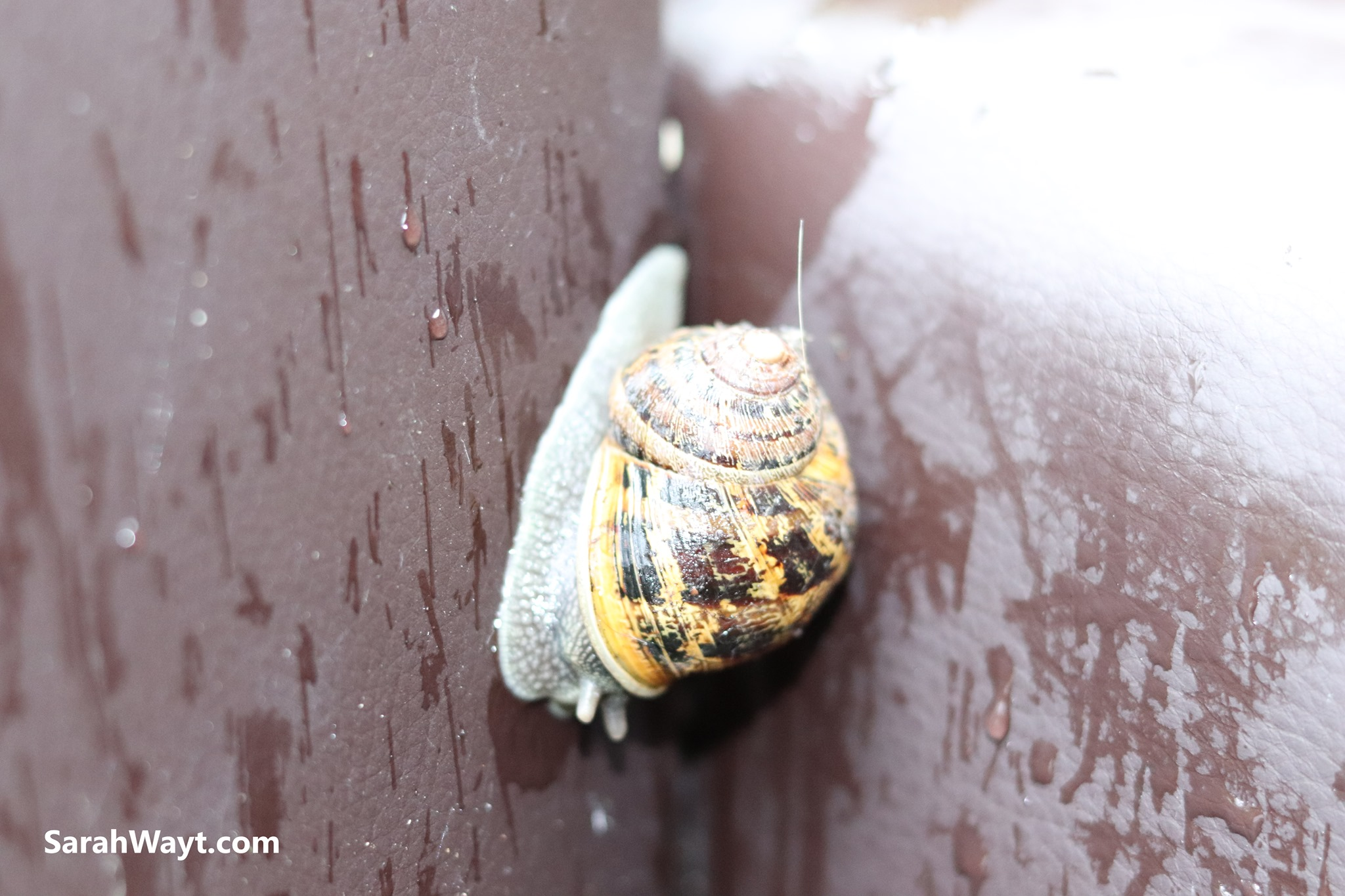 The lowly garden snail that I had a beautiful connection with even though he ate my cucumber plane. This is about loving all life