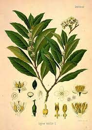bay botanical