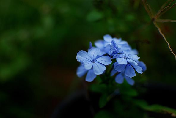 Blg-Flower-1