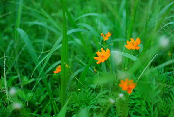 Blg-Flower-2