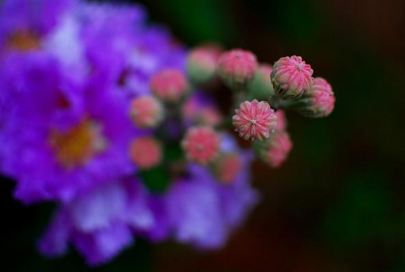 Blg-Flower-3