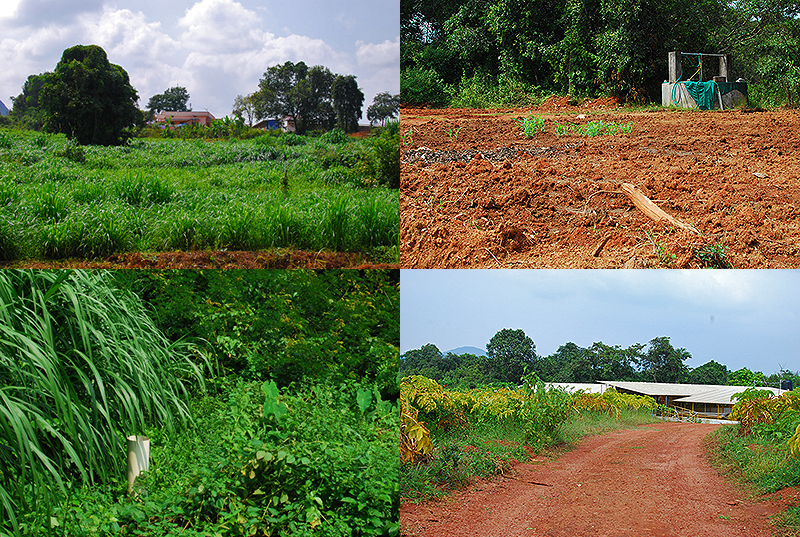 Snapshots from his farm land