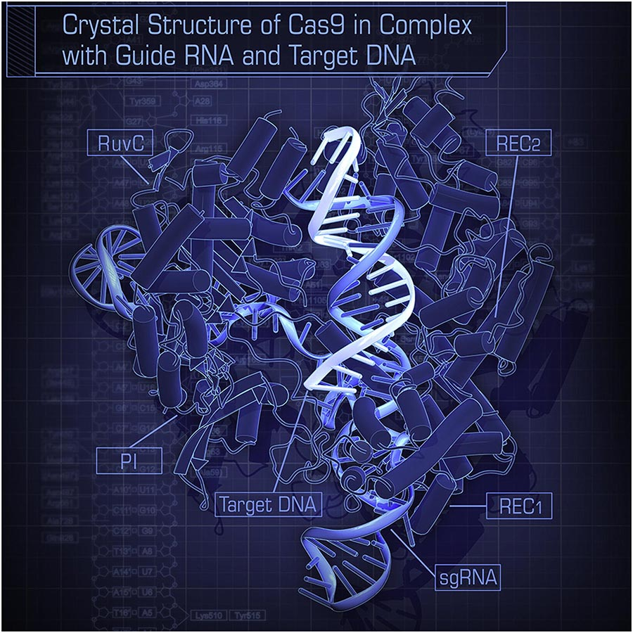 CRISPR-Cas9 Structure
