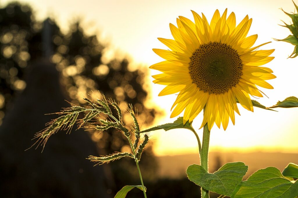 """A yellow flower representing """"sunshine yellow"""" from DISC Personality Assessments"""