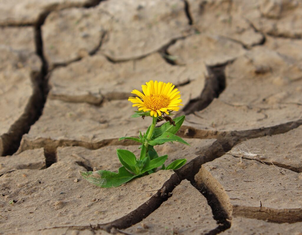 A flower in a desert, representing positive exploration, the first part of this personal values activity