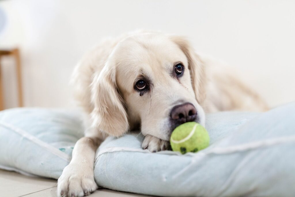 A dog with a tennis ball, as used in The Tennis Ball Game Team Building Activity