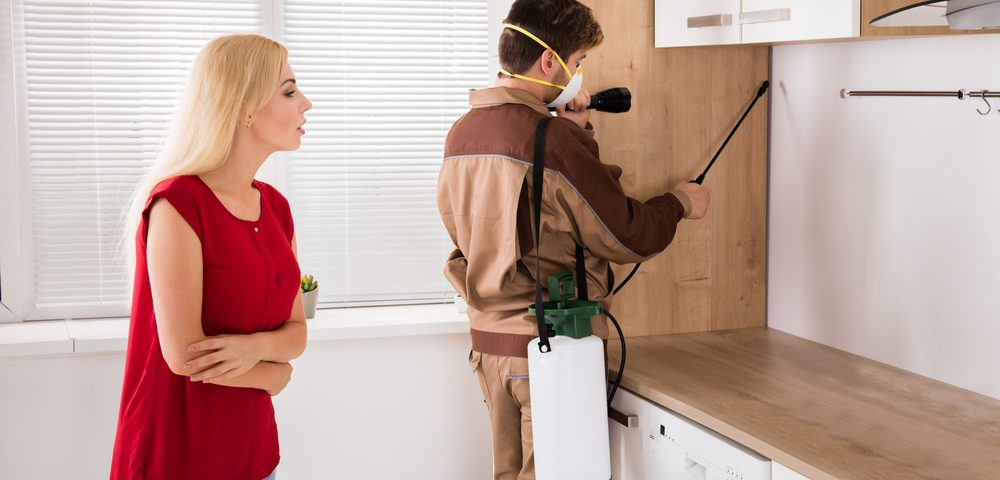 Necessity Of Trained Professionals For Controlling Termites