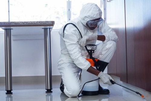 Best Termite Treatment Services in Thousand Oaks