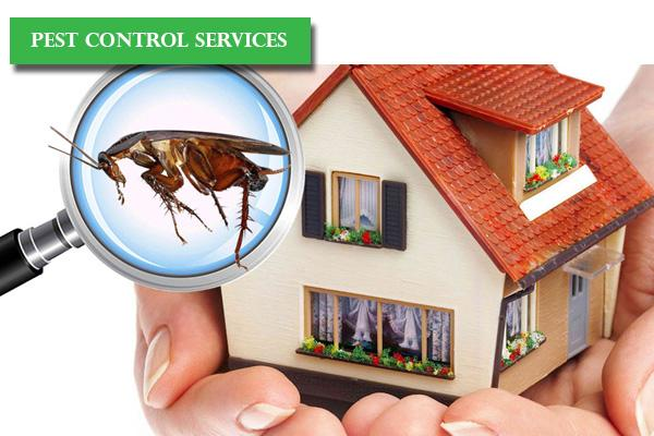 How to tackle Termites