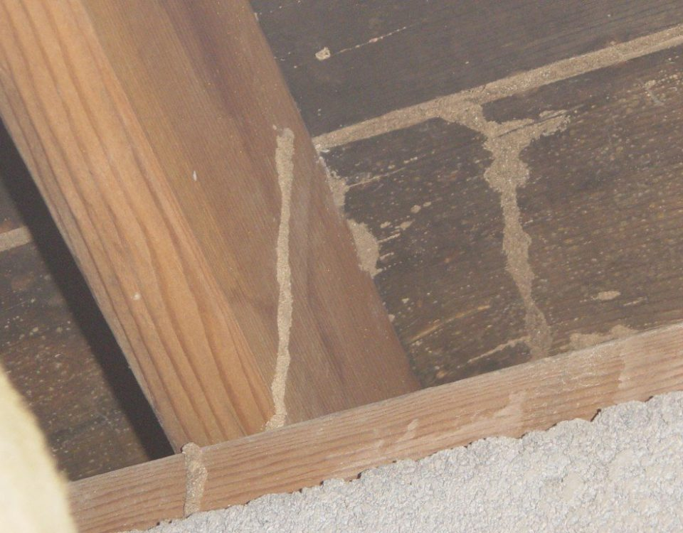 Construct A Termite Free Home