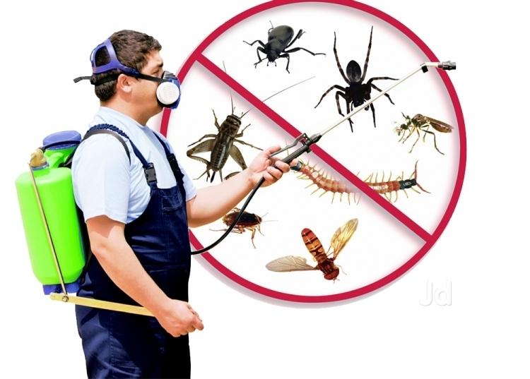 How would You Select the Best Pest Control Service Provider