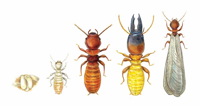 Types of Termite Treatments
