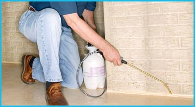 Successful Termite Control Service by Termite Fumigation Beverly Hills