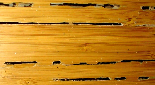 Guidelines for Preserving Wood from Termite Attack