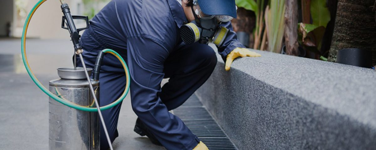 Effective Pest Control Service in Woodland Hills