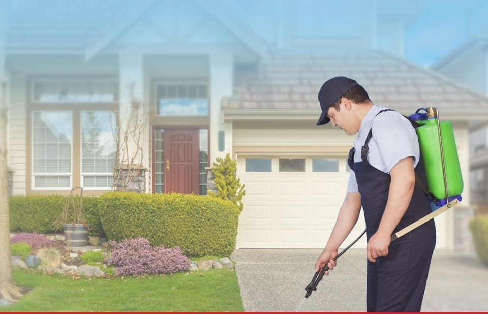 Pest Control Services in Malibu