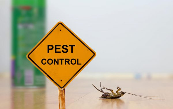 Reliable Pest Control Services