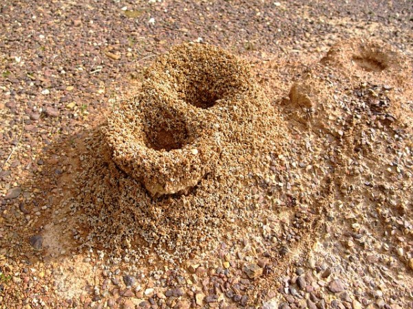 Termite Mound Effects
