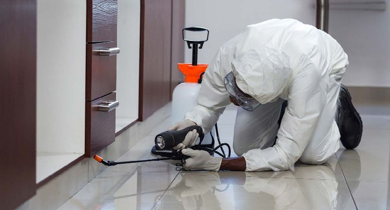 Termite Control Solutions in Glendale