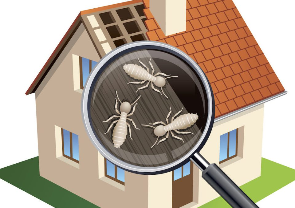 What is the Cost of a Termite Treatment?