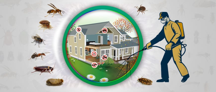Government Approved Termite Control Services