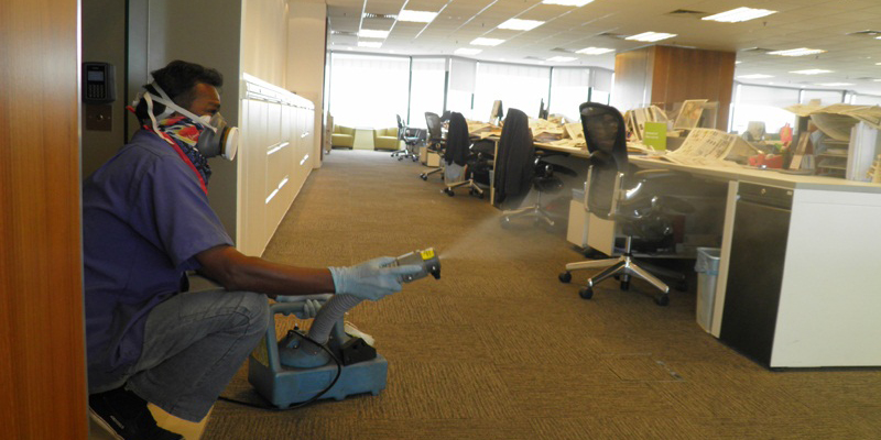 Commercial Pest Control Services for IT Companies