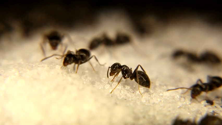 Need to get rid of Ants