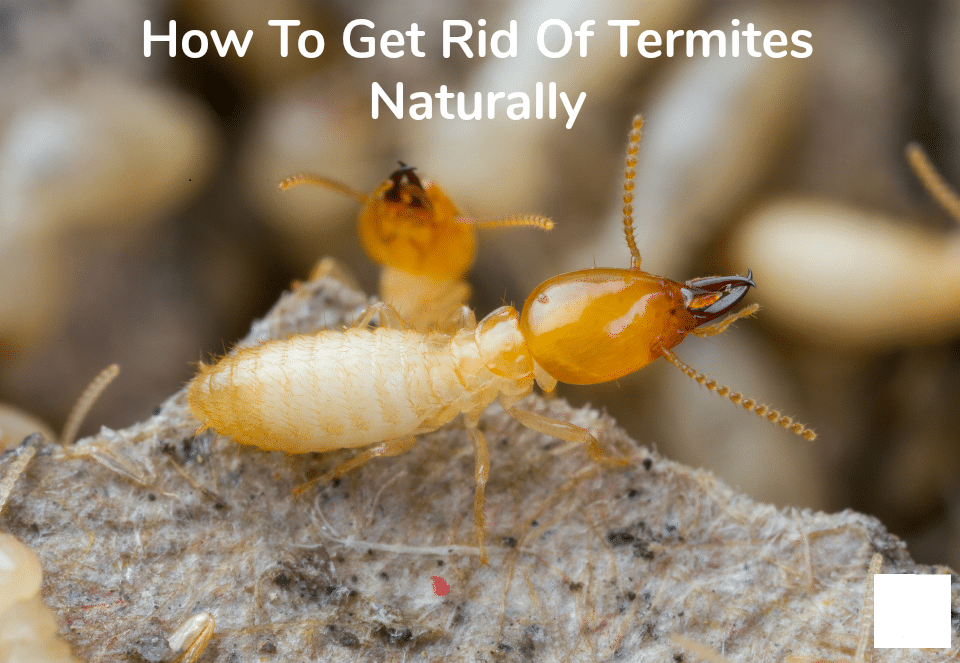 Natural Ways to Treat Termites