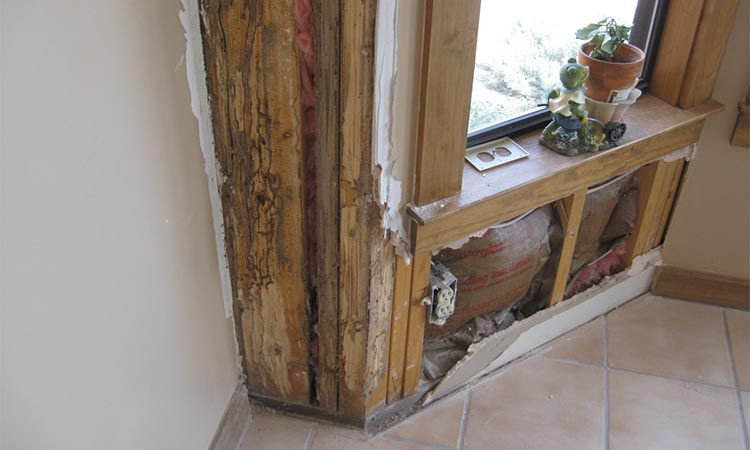 Termite Damage Repair Service