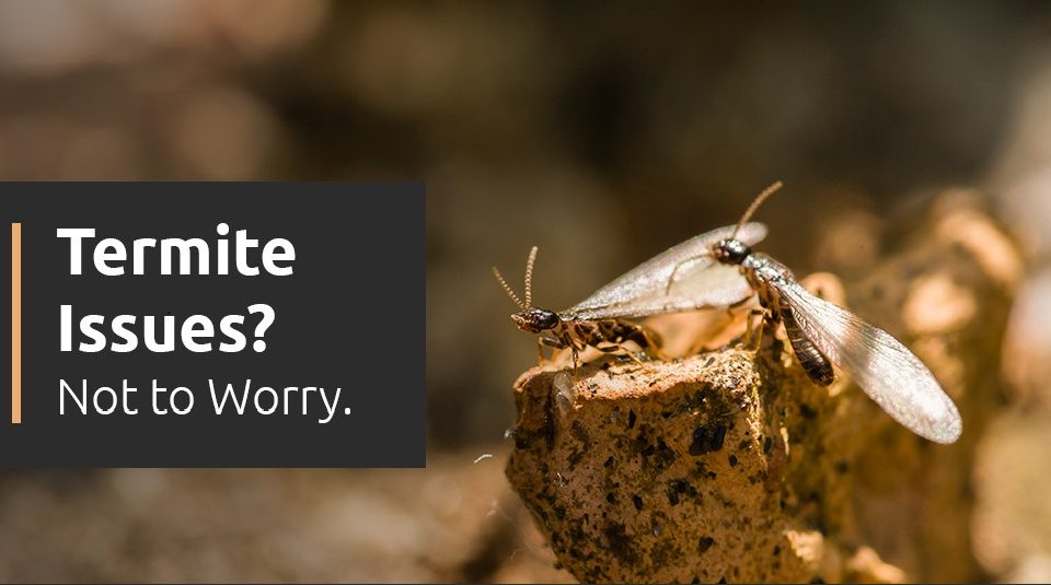Are you worried about Termites