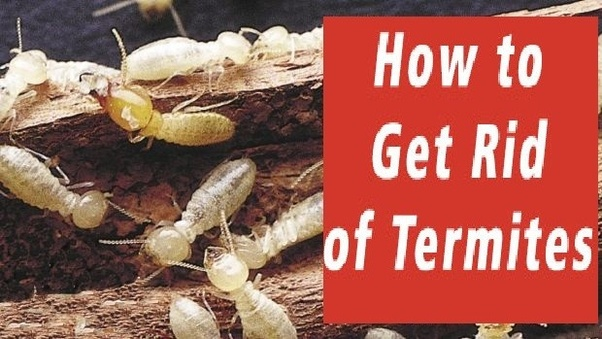 Need to Get rid of Termites