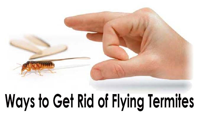 Need Home Remedy to deal with Termites