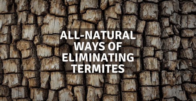 Why hire Service from My Termite Company