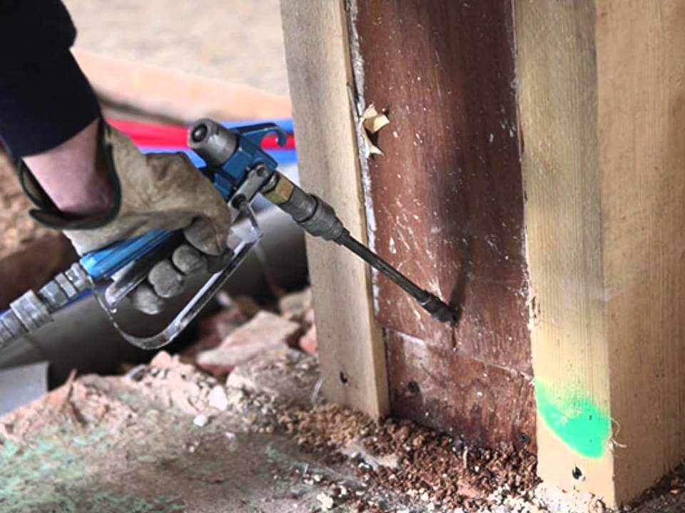 Access the Right Professional for Termite Treatment