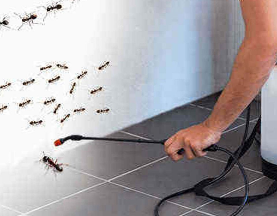 Need Instant Termite Control Solution