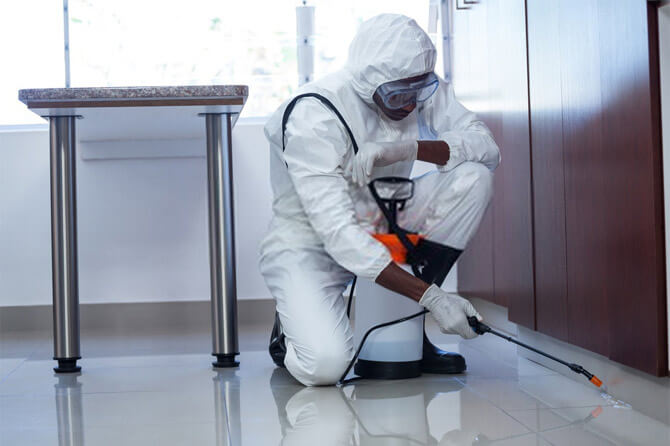 Why should you hire Pest Control Services from My Termite