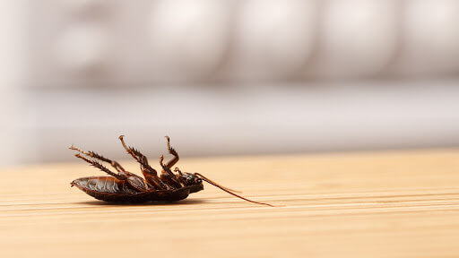 Why should you hire Professional Pest Control Services