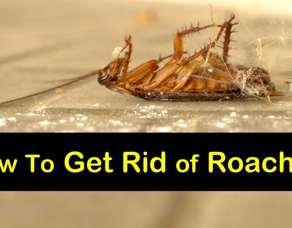 Want to Get Rid of Roaches?