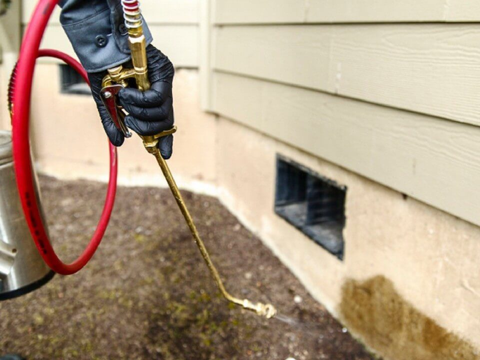 Sophisticated Termite Control Service in Los Angeles