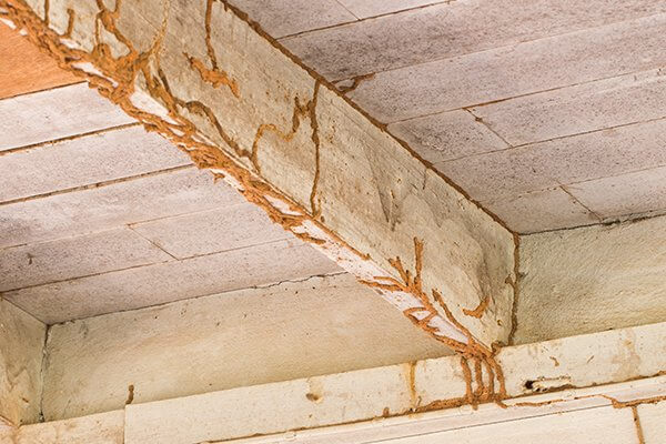 Why do you need to Rely on a Termite Damage Repair Contractor in Altadena
