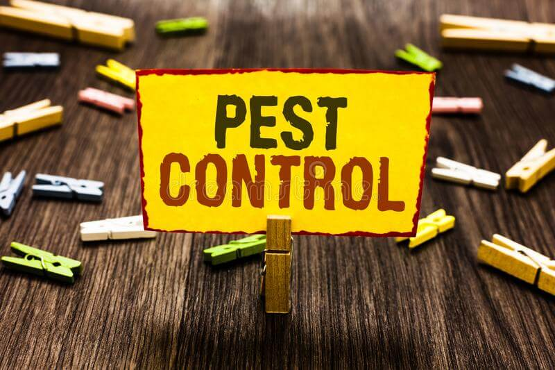 Looking for a Termite Treatment Services for your Kitchen