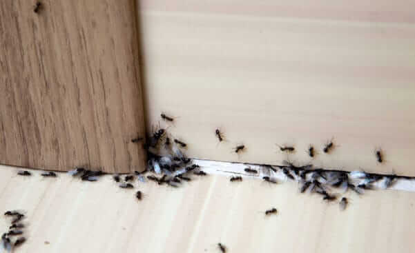 Looking to Banish Termites from your Kitchen