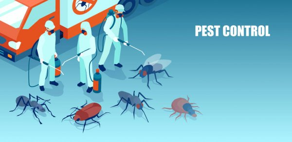 You could request a quote at quality pest control services in Malibu