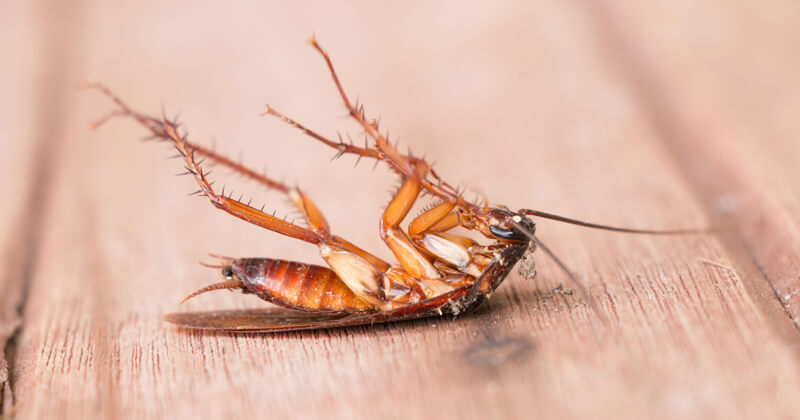 Pest Management Intervention to Control Cockroaches