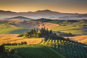 Vigna campagna OenoInvest