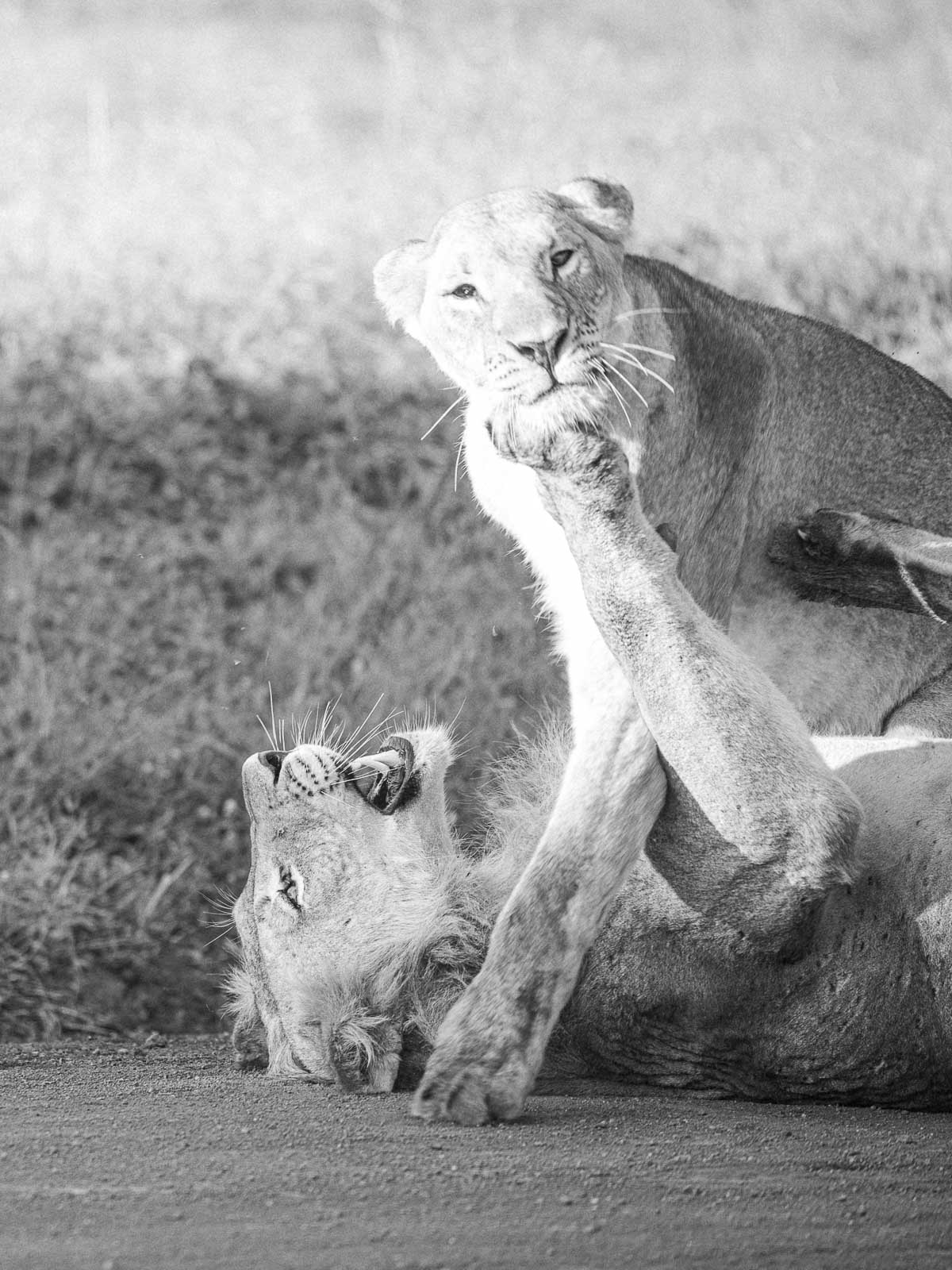 Lions3x4-4