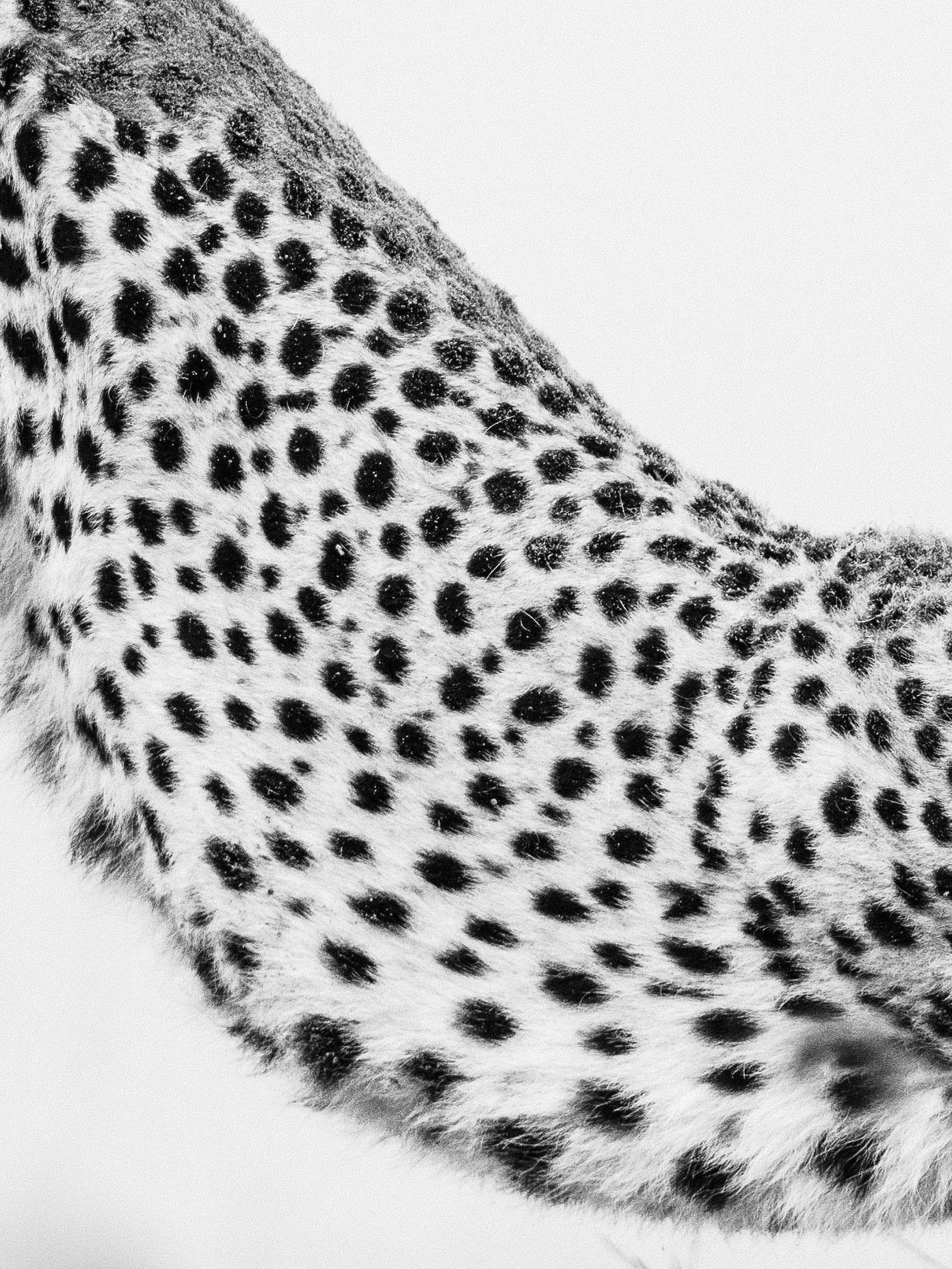 CheetahSpots4x3